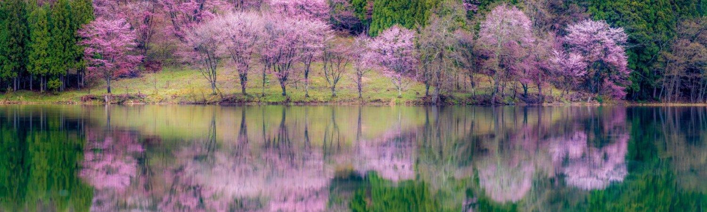 Aokiko in Spring